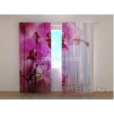 Фотоштора Пурпурная ветка орхидеи