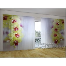 Панорама Объемная 3D ФотоШтора Лаймовая орхидея